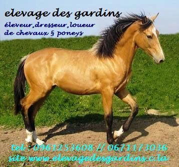 élevage des gardins élevage de chevaux et poneys de couleurs